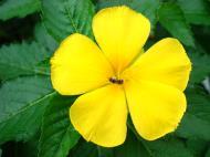 Asisbiz Tropical garden flowers Ayala Alabang Manila Philippines 04
