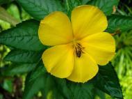 Asisbiz Tropical garden flowers Ayala Alabang Manila Philippines 05