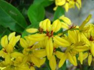 Asisbiz Tropical garden flowers Ayala Alabang Manila Philippines 29