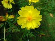 Asisbiz Tropical garden flowers Ayala Alabang Manila Philippines 33