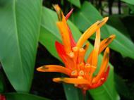 Asisbiz Tropical garden flowers Ayala Alabang Manila Philippines 40