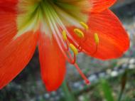 Asisbiz Tropical garden flowers Ayala Alabang Manila Philippines 67