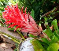Asisbiz Tropical garden flowers Ayala Alabang Manila Philippines 99