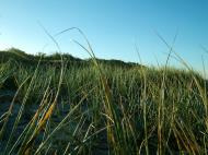 Asisbiz Australia Marcus Beach Sand Grass 01