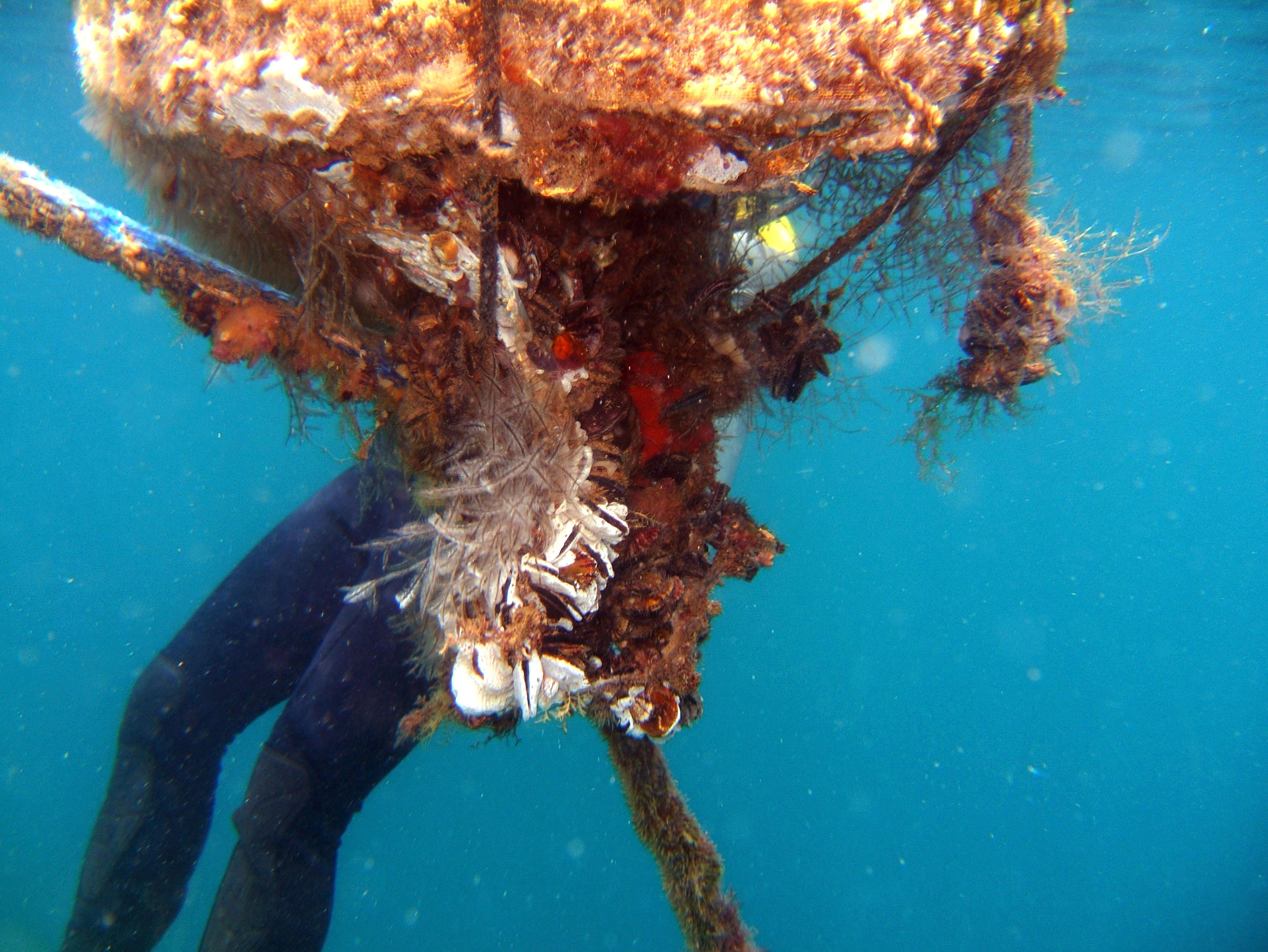 Coron dive site 3 Wreck dive IJN Akitushima July 2005 01