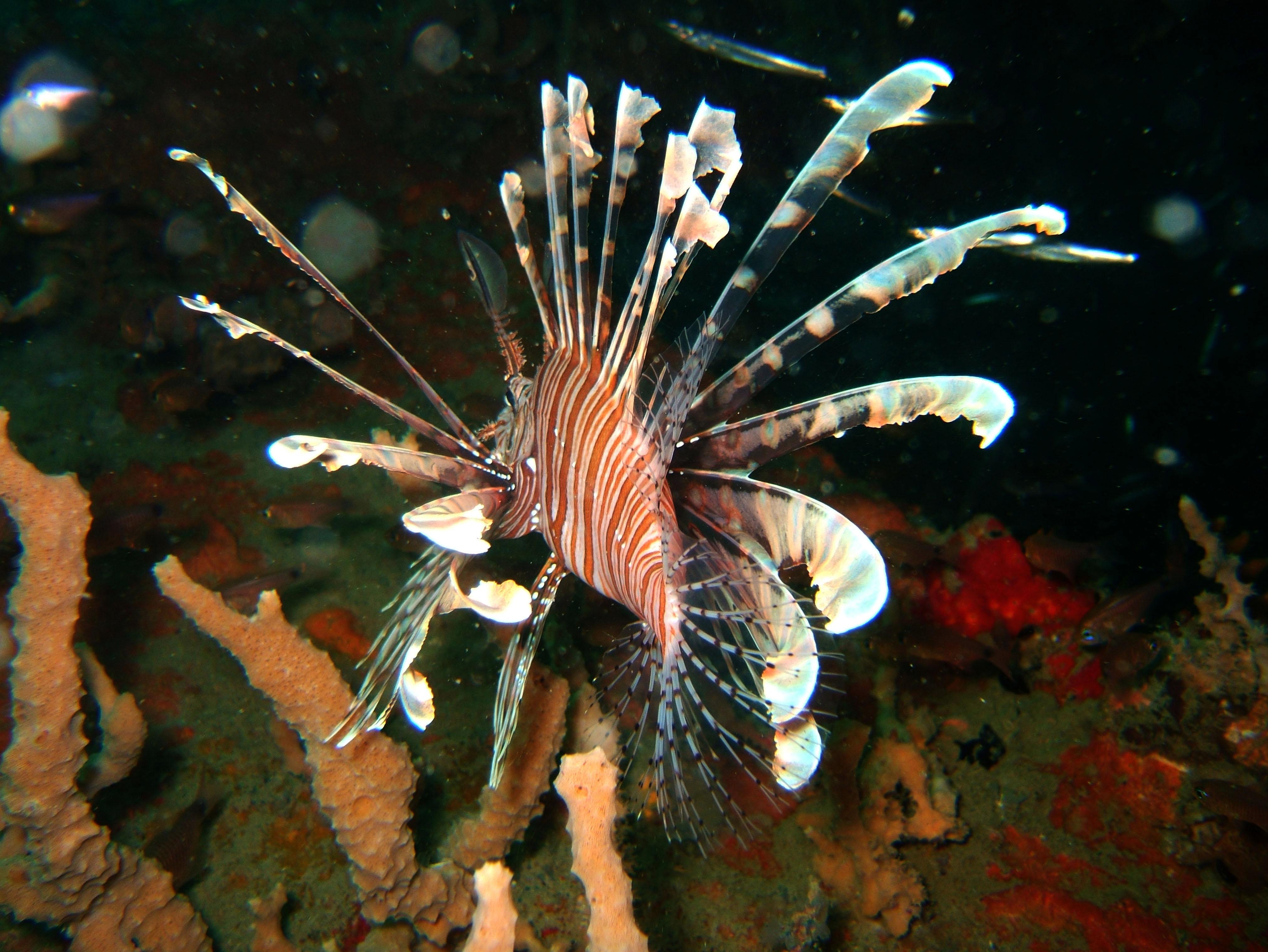 Coron dive site 3 Wreck dive IJN Akitushima July 2005 06