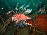 Asisbiz Coron dive site 3 Wreck dive IJN Akitushima July 2005 10