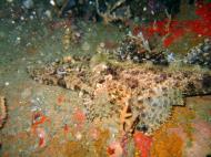 Asisbiz Coron dive site 3 Wreck dive IJN Akitushima July 2005 16