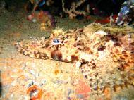 Asisbiz Coron dive site 3 Wreck dive IJN Akitushima July 2005 18