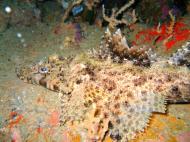 Asisbiz Coron dive site 3 Wreck dive IJN Akitushima July 2005 19