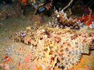 Asisbiz Coron dive site 3 Wreck dive IJN Akitushima July 2005 20