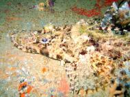 Asisbiz Coron dive site 3 Wreck dive IJN Akitushima July 2005 21