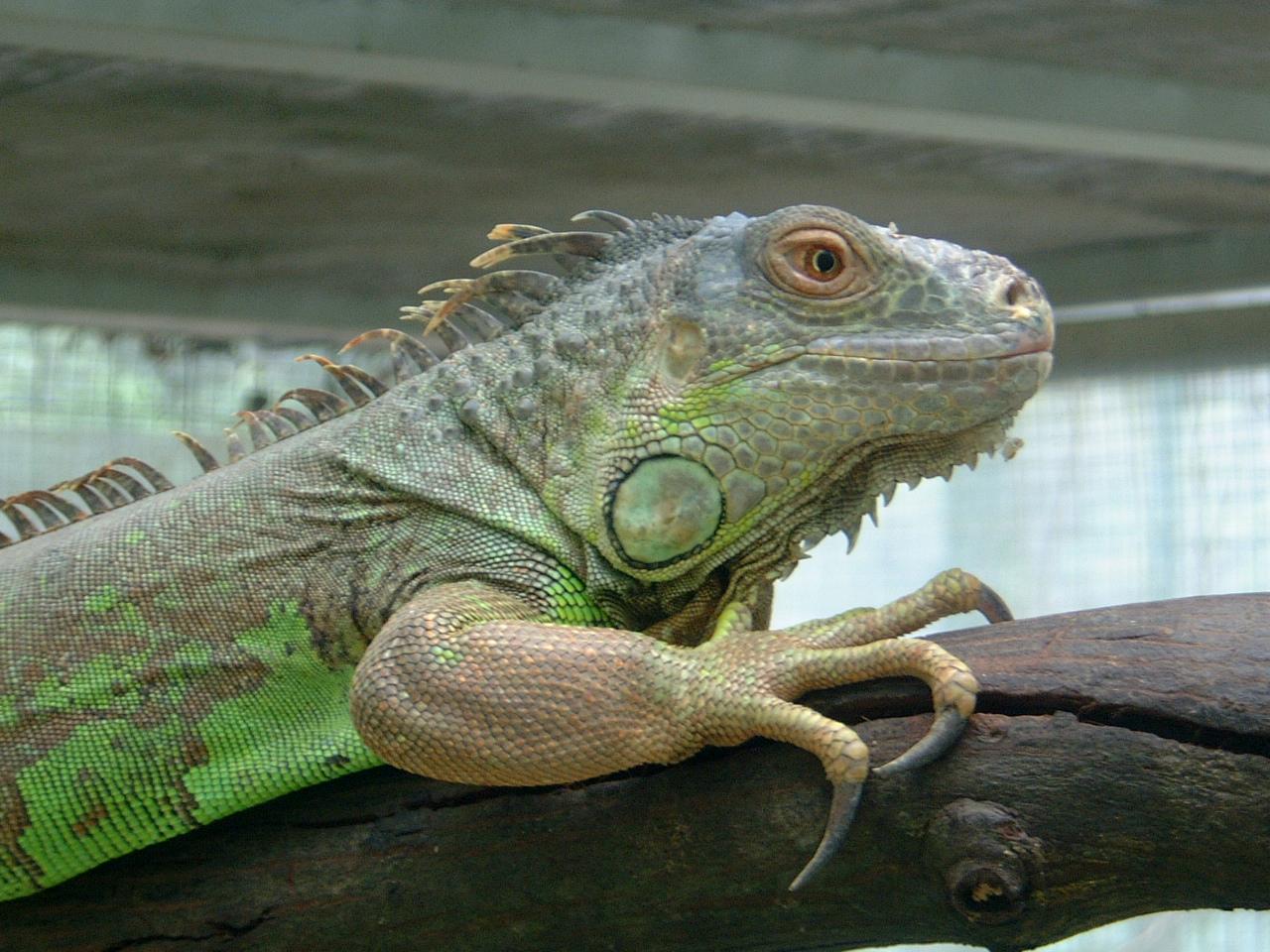 Dragon Malaysia Penang Butterfly Park 01
