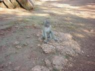Asisbiz Monkey Myanmar Bilin Kyaik Hti Saung pagoda 02