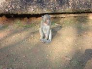 Asisbiz Monkey Myanmar Bilin Kyaik Hti Saung pagoda 03