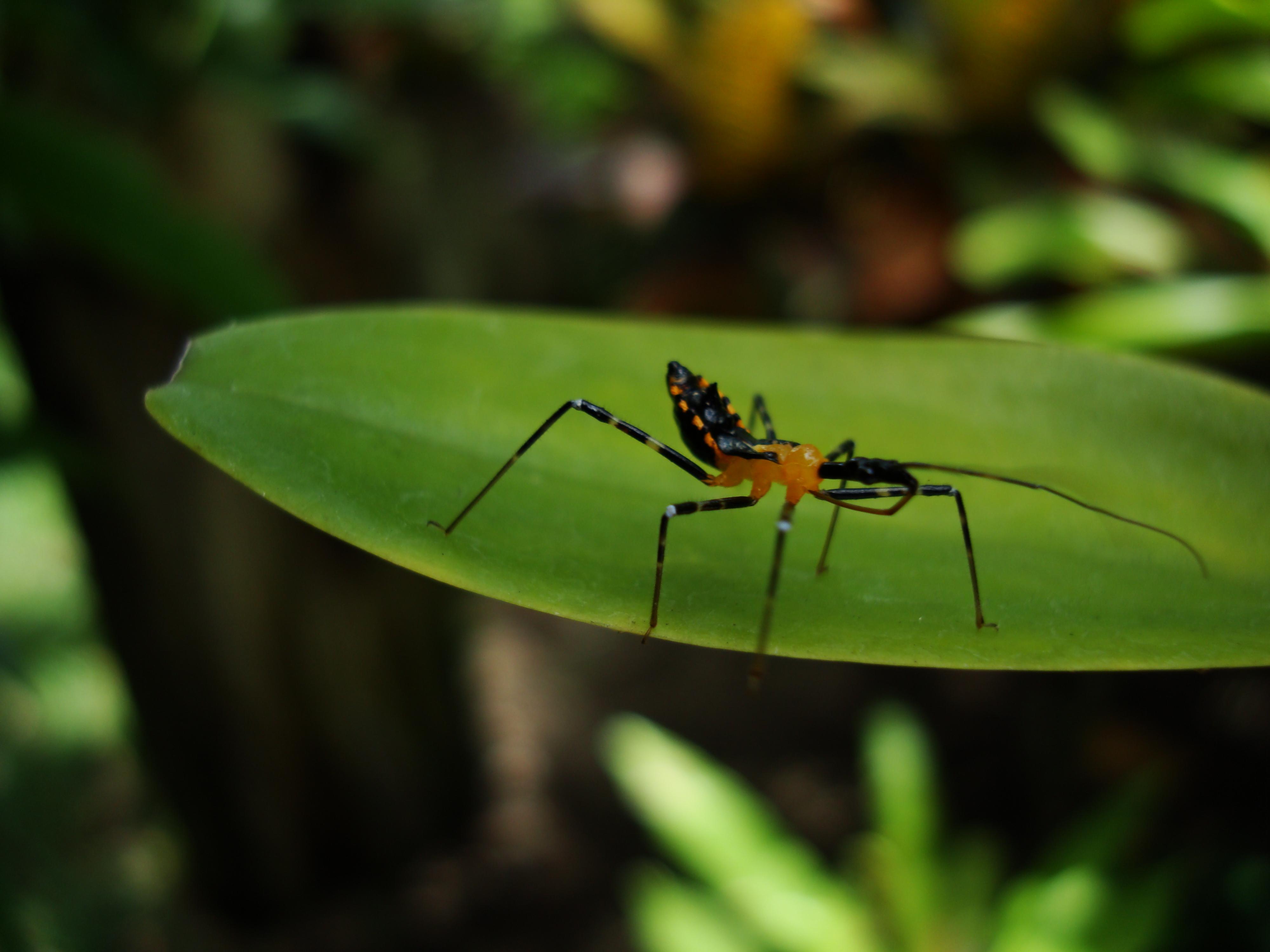 Bug New Species Philippines 03