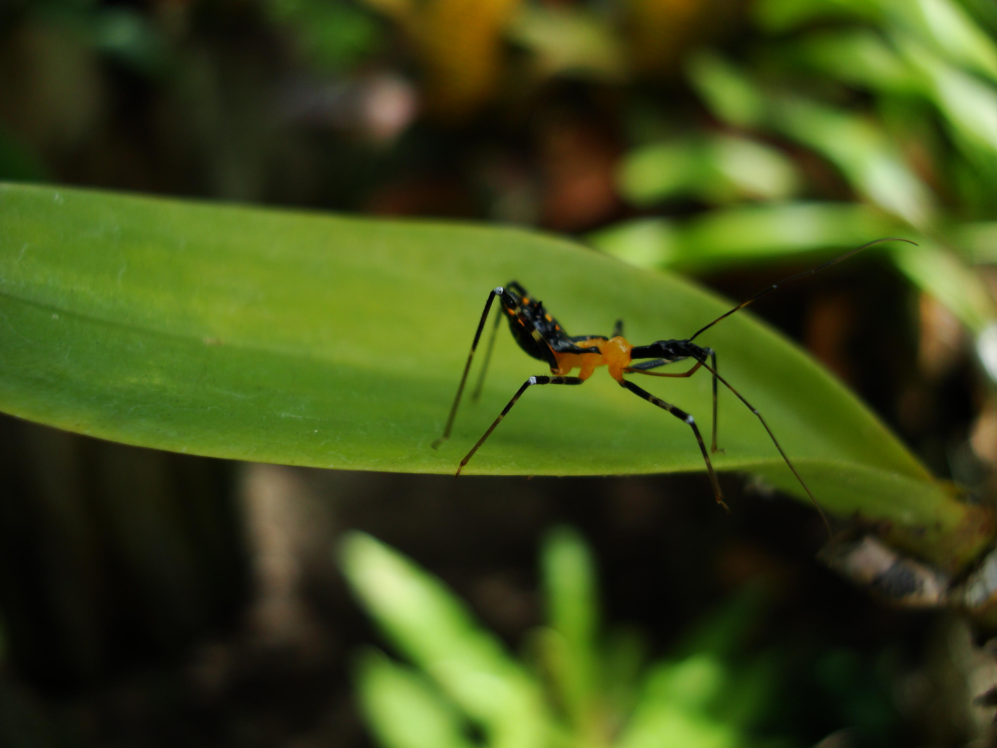 Bug New Species Philippines 04