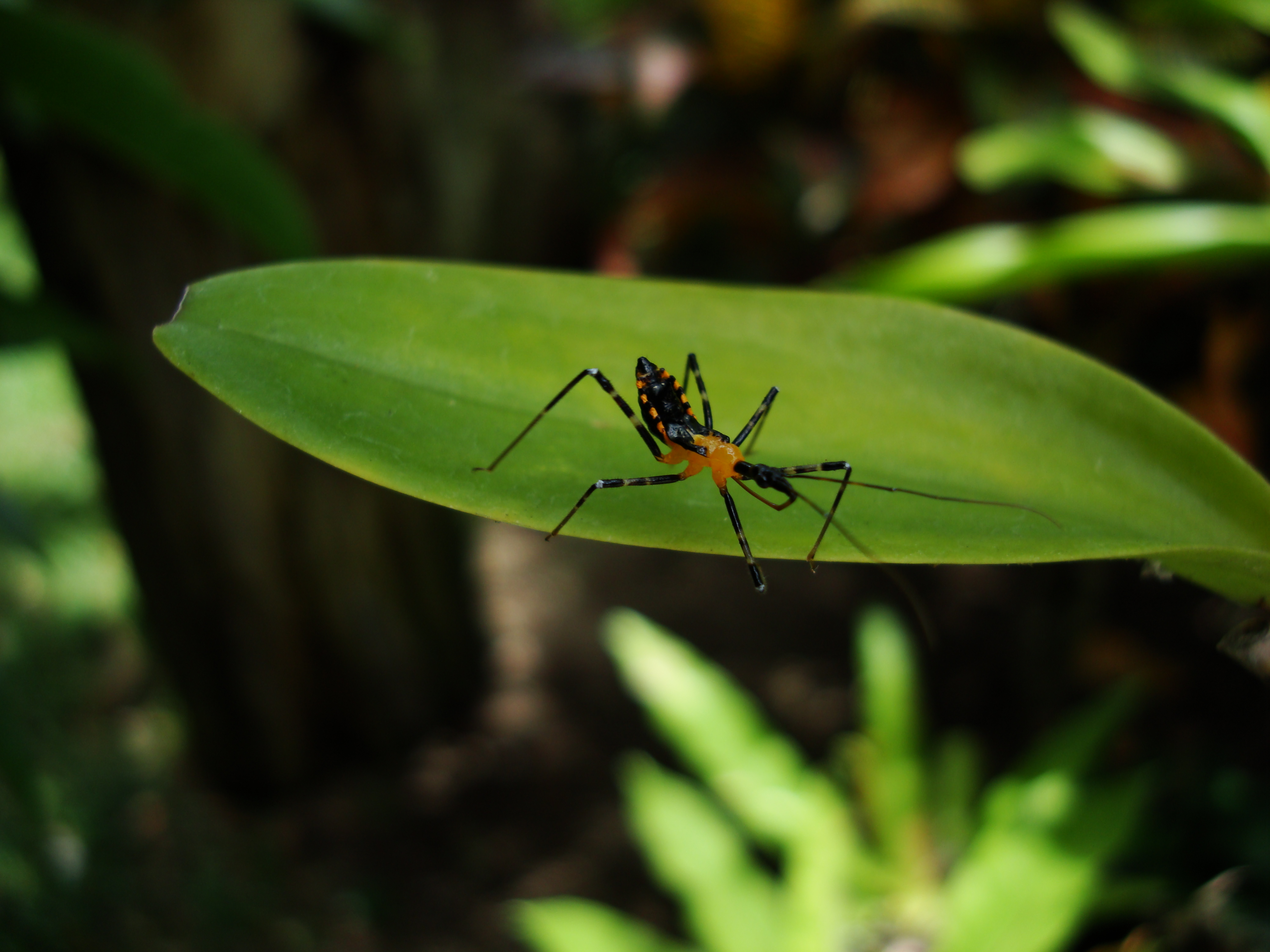 Bug New Species Philippines 05