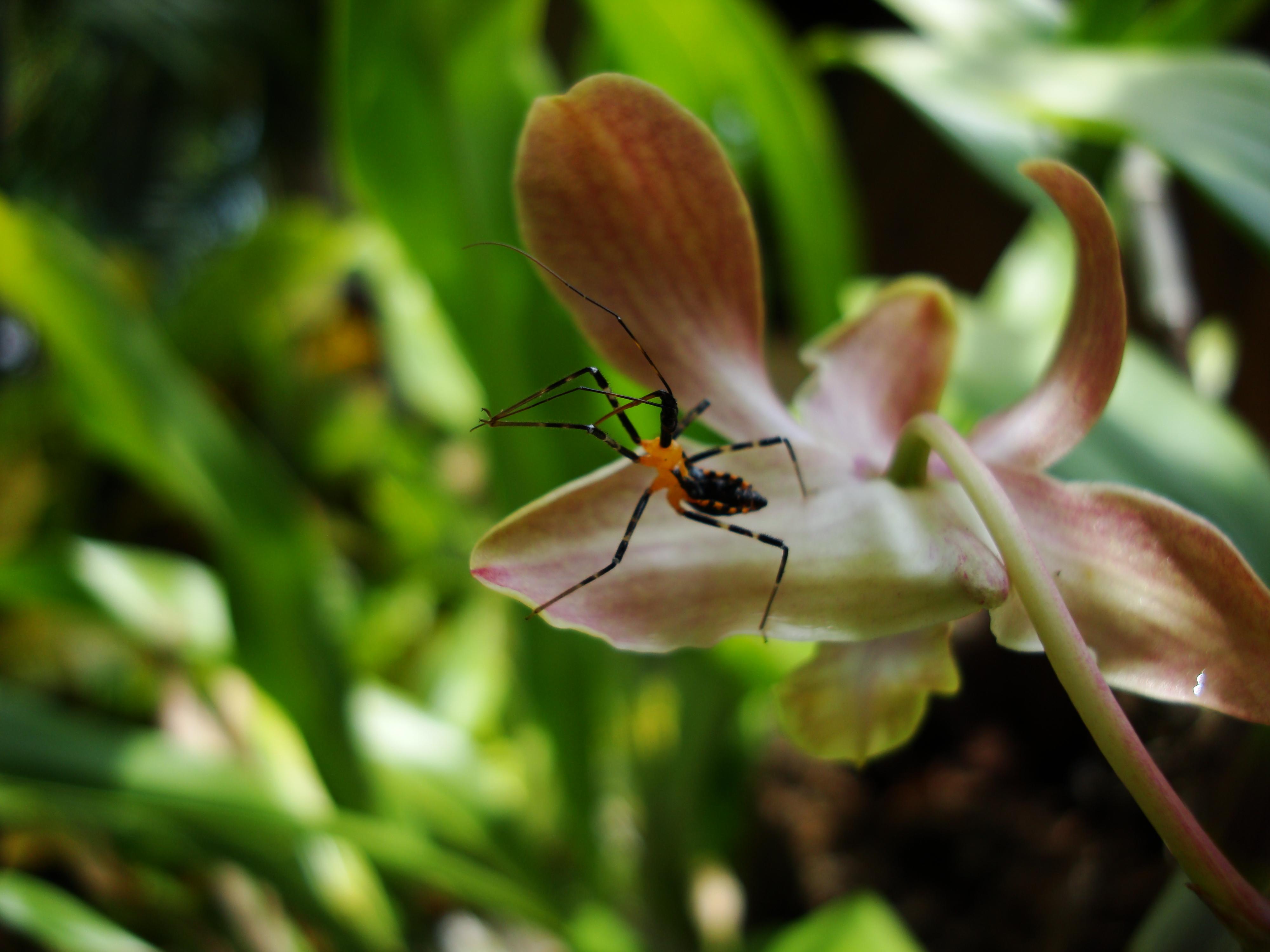 Bug New Species Philippines 09