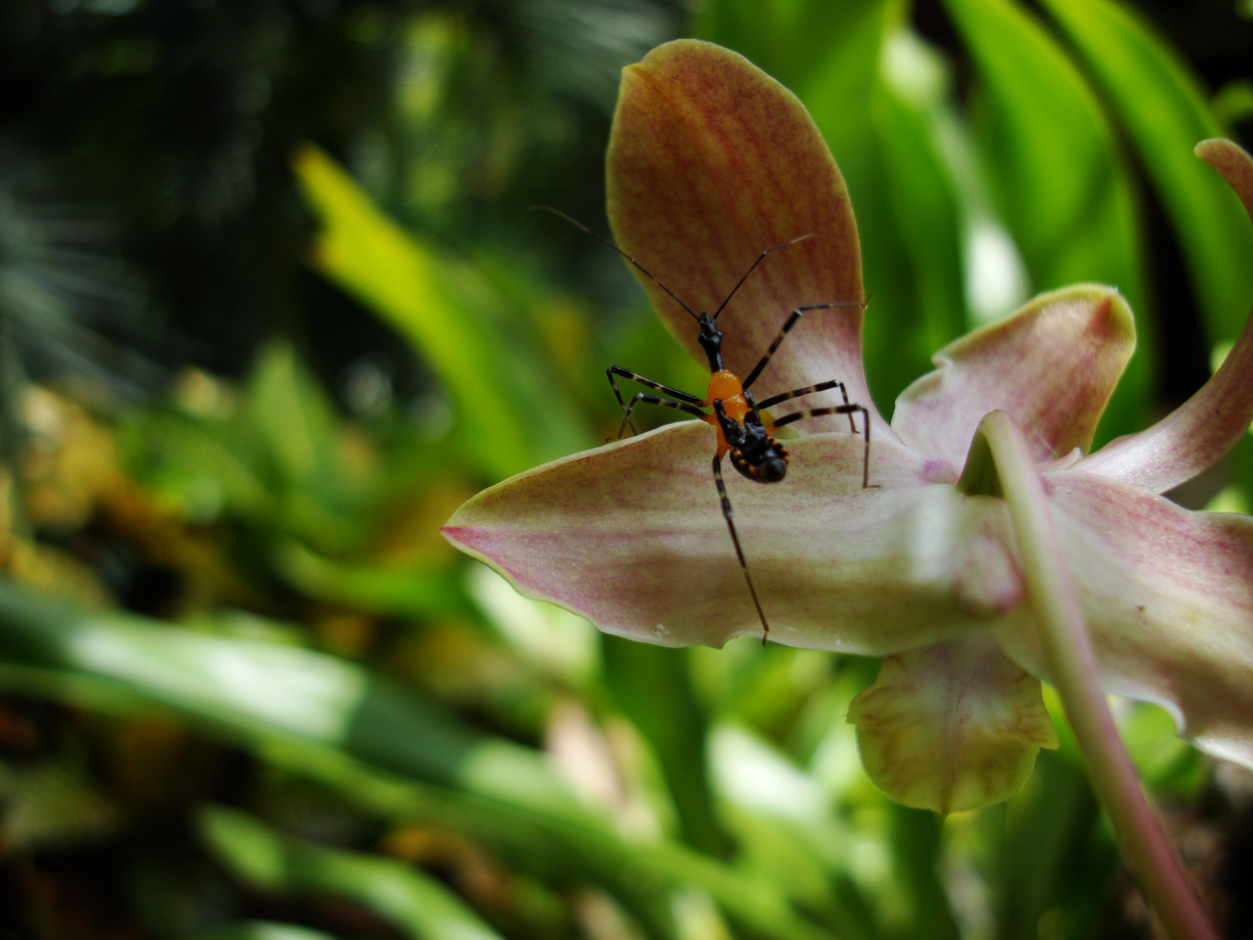 Bug New Species Philippines 10
