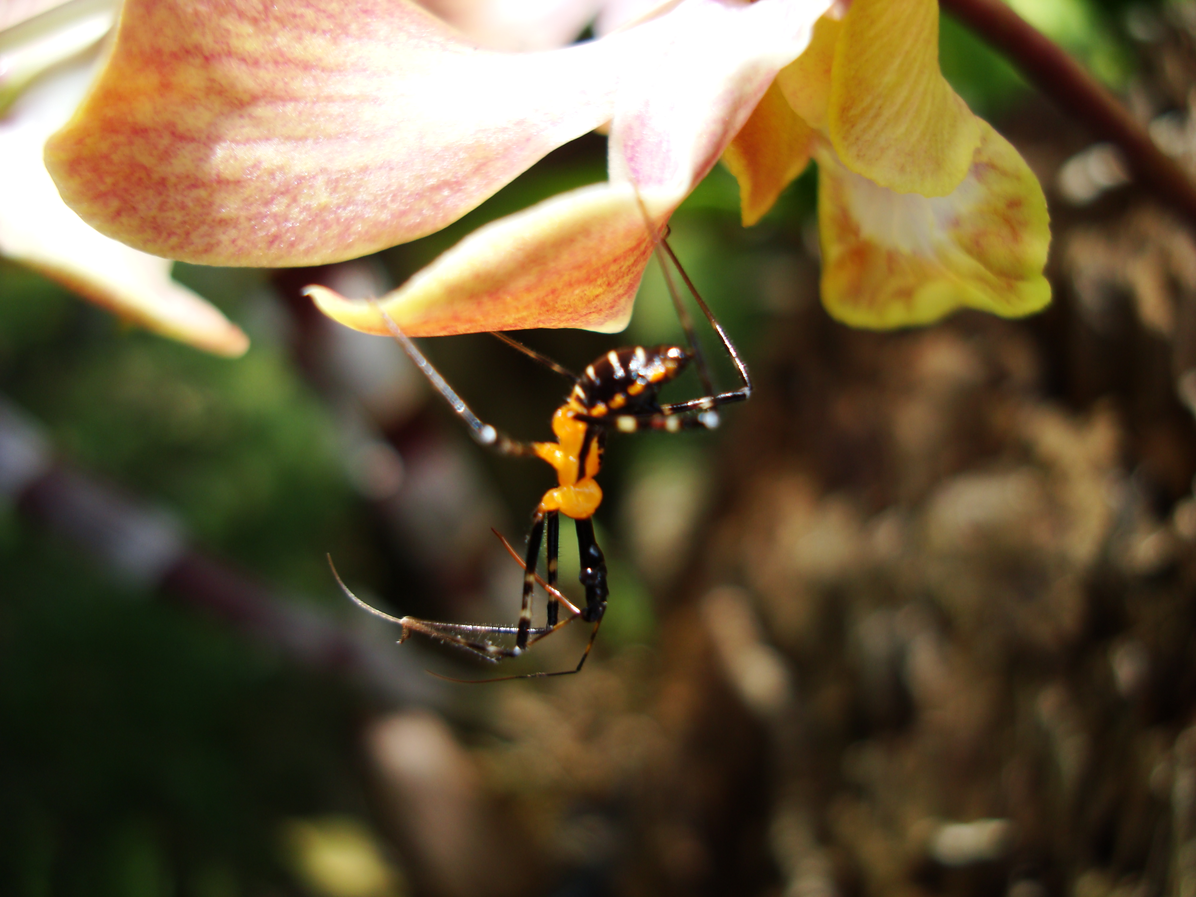 Bug New Species Philippines 21