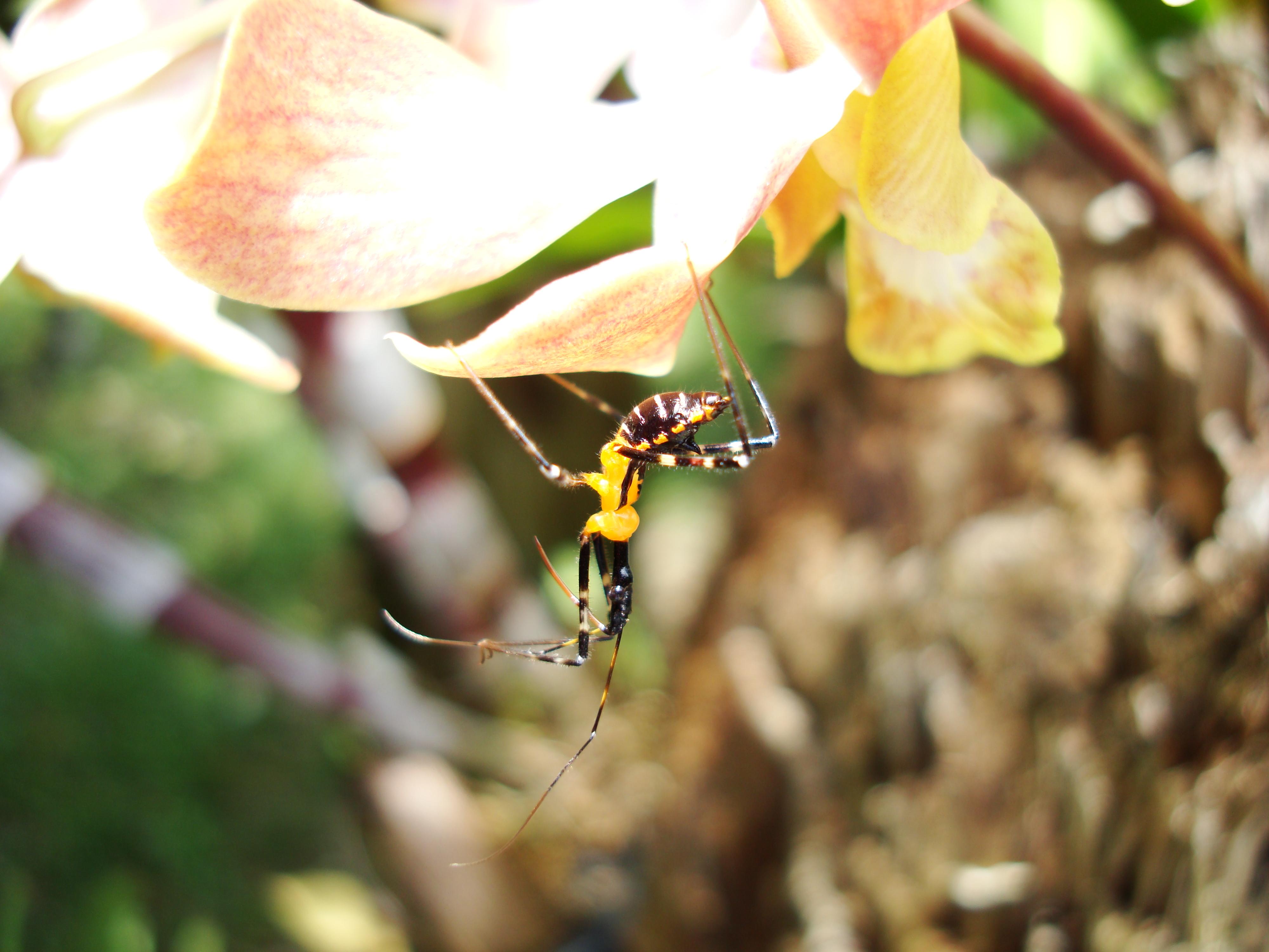 Bug New Species Philippines 22