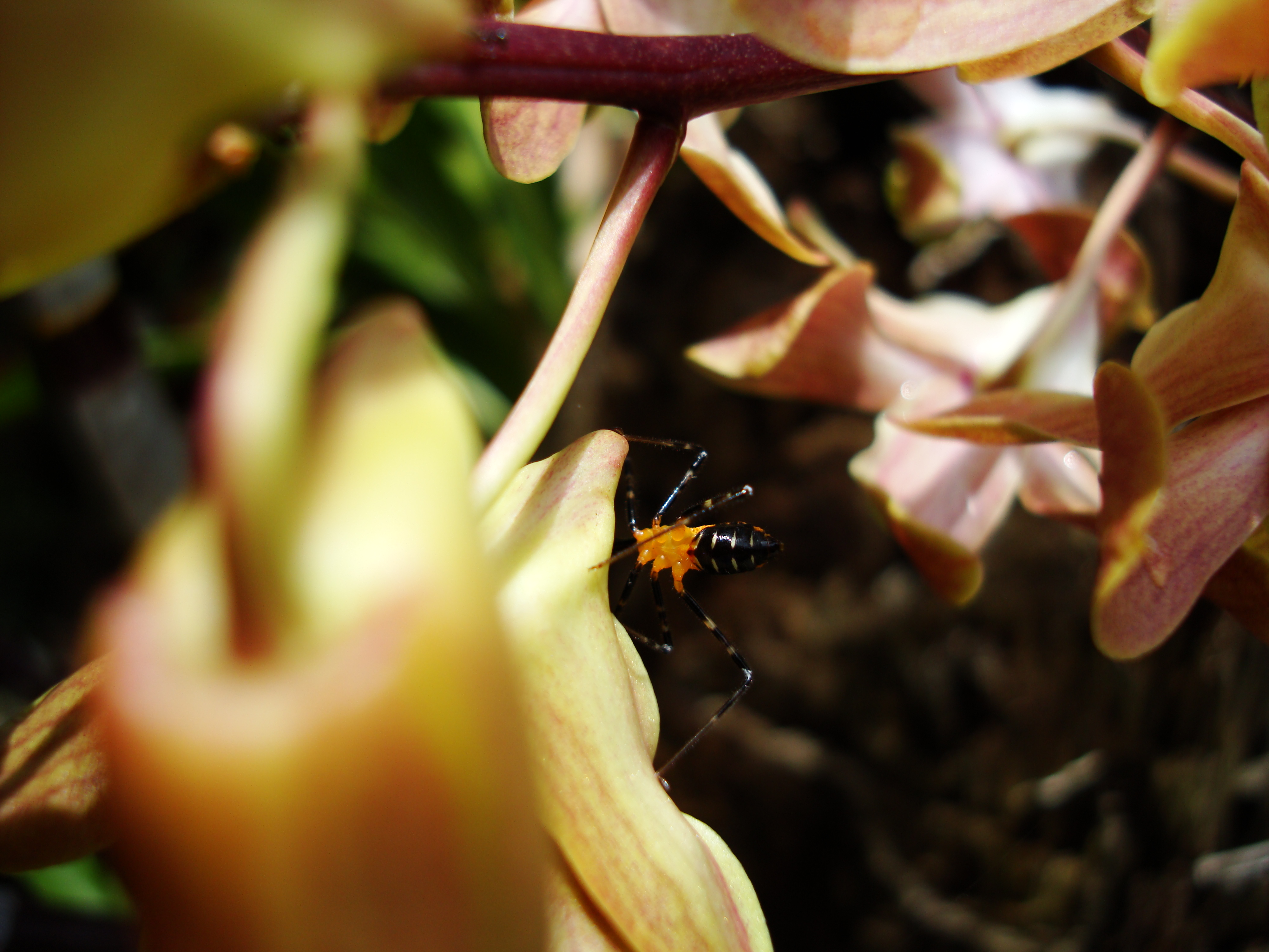 Bug New Species Philippines 24