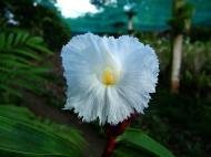 Asisbiz Orchid farm Moal Boal Cebu Philippine 29