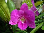 Asisbiz Orchids Soliman Paraiso gardens Tabinay Mindoro Oriental Philippine 002