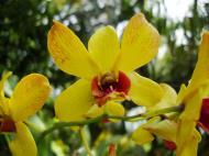 Asisbiz Orchids Soliman Paraiso gardens Tabinay Mindoro Oriental Philippine 030