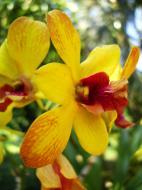 Asisbiz Orchids Soliman Paraiso gardens Tabinay Mindoro Oriental Philippine 031