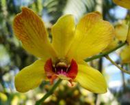 Asisbiz Orchids Soliman Paraiso gardens Tabinay Mindoro Oriental Philippine 032
