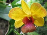 Asisbiz Orchids Soliman Paraiso gardens Tabinay Mindoro Oriental Philippine 034