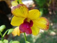 Asisbiz Orchids Soliman Paraiso gardens Tabinay Mindoro Oriental Philippine 035