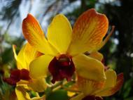 Asisbiz Orchids Soliman Paraiso gardens Tabinay Mindoro Oriental Philippine 040