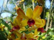 Asisbiz Orchids Soliman Paraiso gardens Tabinay Mindoro Oriental Philippine 041