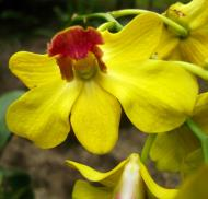 Asisbiz Orchids Soliman Paraiso gardens Tabinay Mindoro Oriental Philippine 045