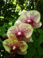 Asisbiz Orchids Soliman Paraiso gardens Tabinay Mindoro Oriental Philippine 050