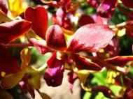 Asisbiz Orchids Soliman Paraiso gardens Tabinay Mindoro Oriental Philippine 057