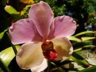 Asisbiz Orchids Soliman Paraiso gardens Tabinay Mindoro Oriental Philippine 094