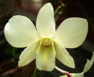 Asisbiz Orchids Soliman Paraiso gardens Tabinay Mindoro Oriental Philippine 112