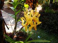 Asisbiz Orchids Soliman Paraiso gardens Tabinay Mindoro Oriental Philippine 114