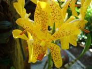 Asisbiz Orchids Soliman Paraiso gardens Tabinay Mindoro Oriental Philippine 117