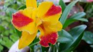 Asisbiz Orchids Soliman Paraiso gardens Tabinay Mindoro Oriental Philippine 120