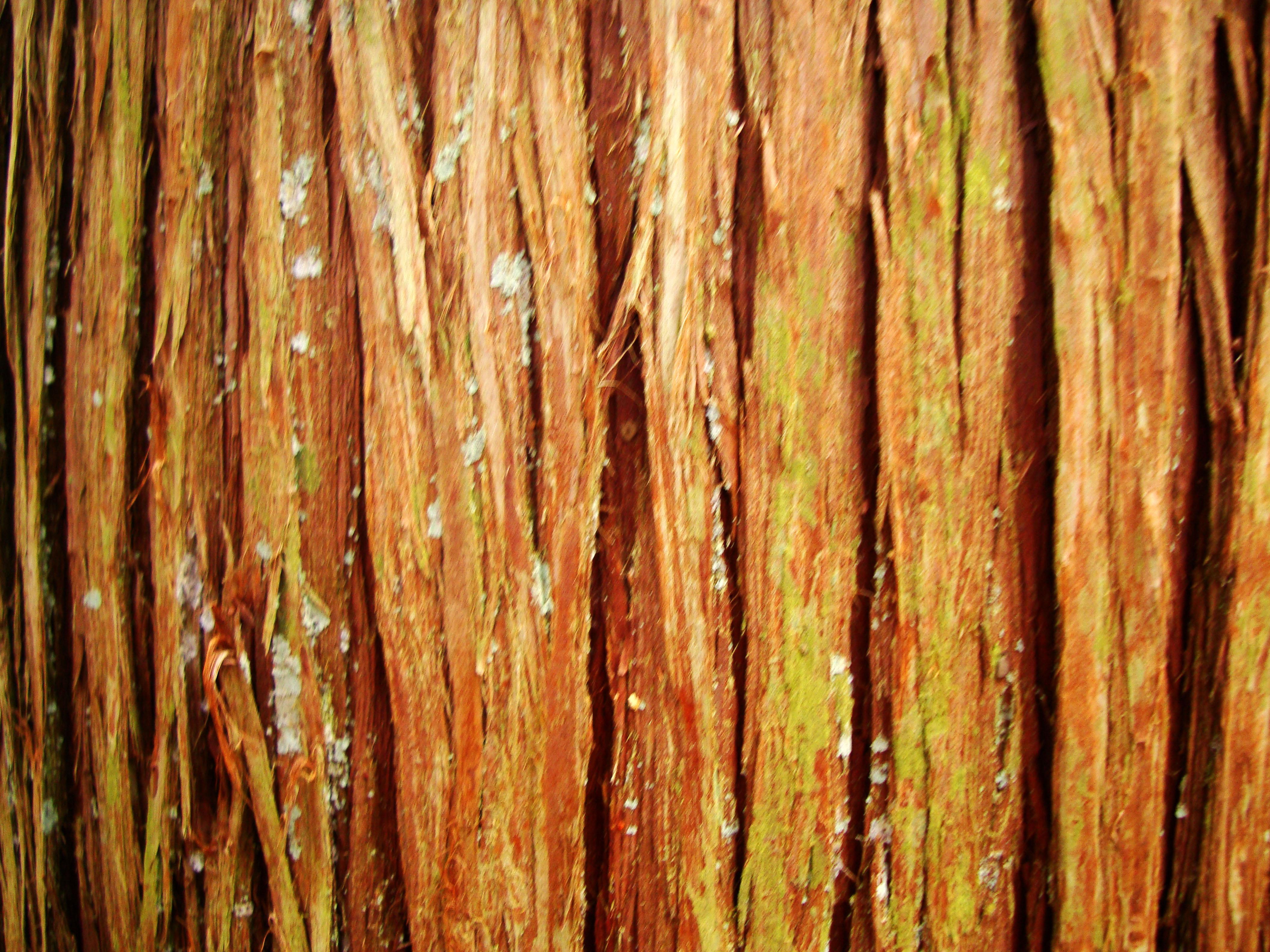 Rokuon ji Temple pine tree textures Kyoto Japan Nov 2009 03