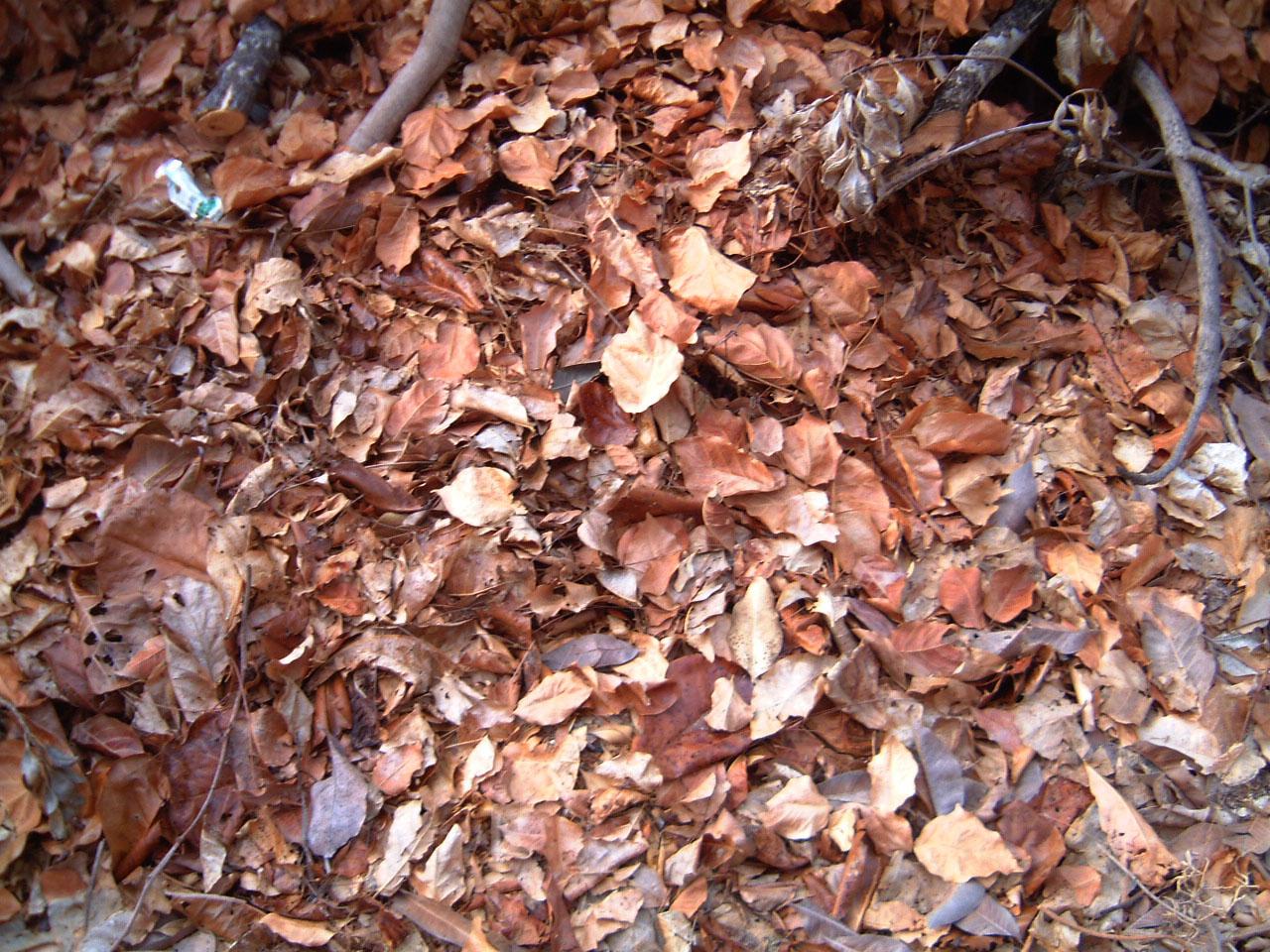 Textures Leaves Vegitation 01