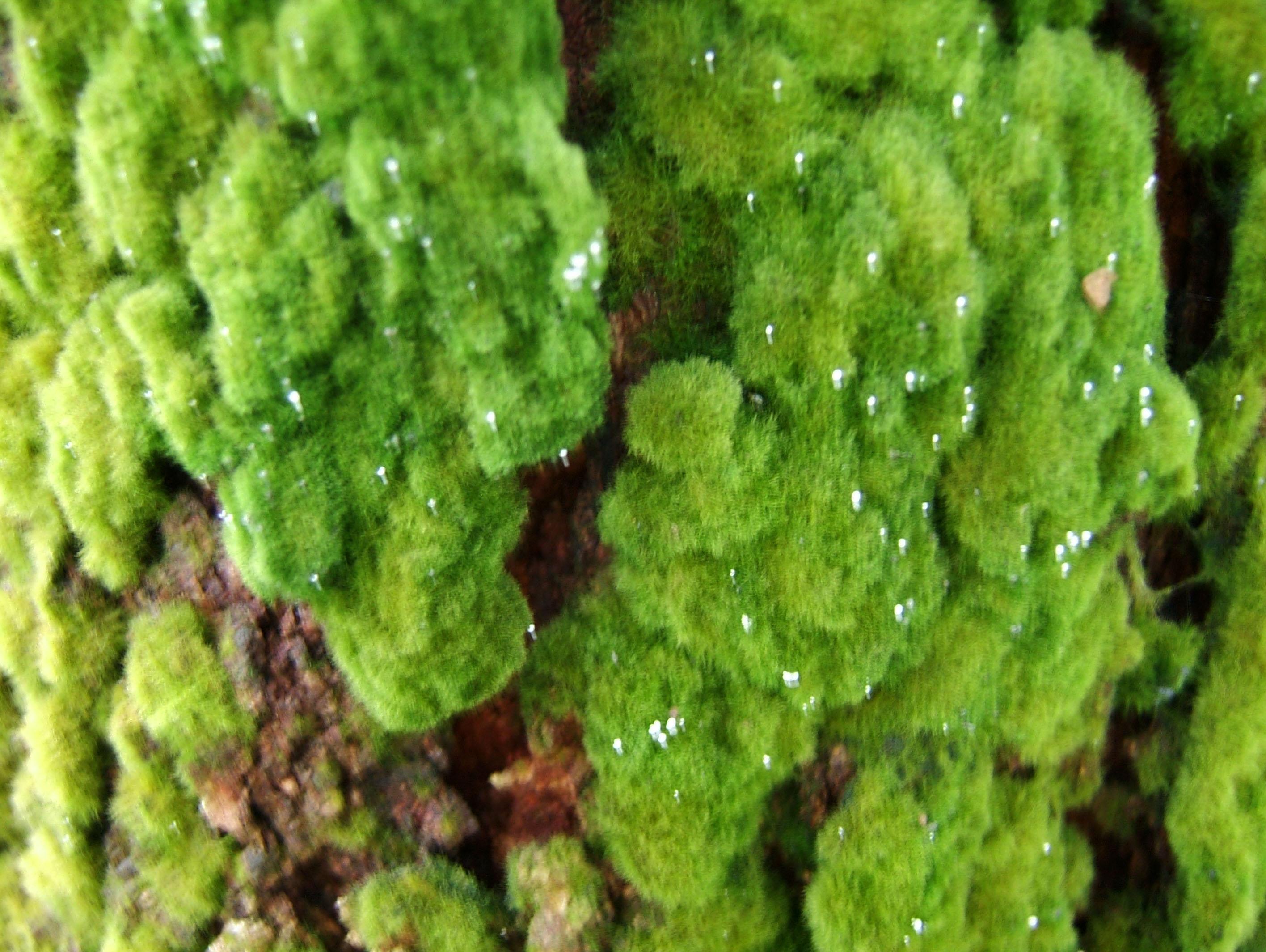 Textures Moss Singapore Botanical Gardens 01