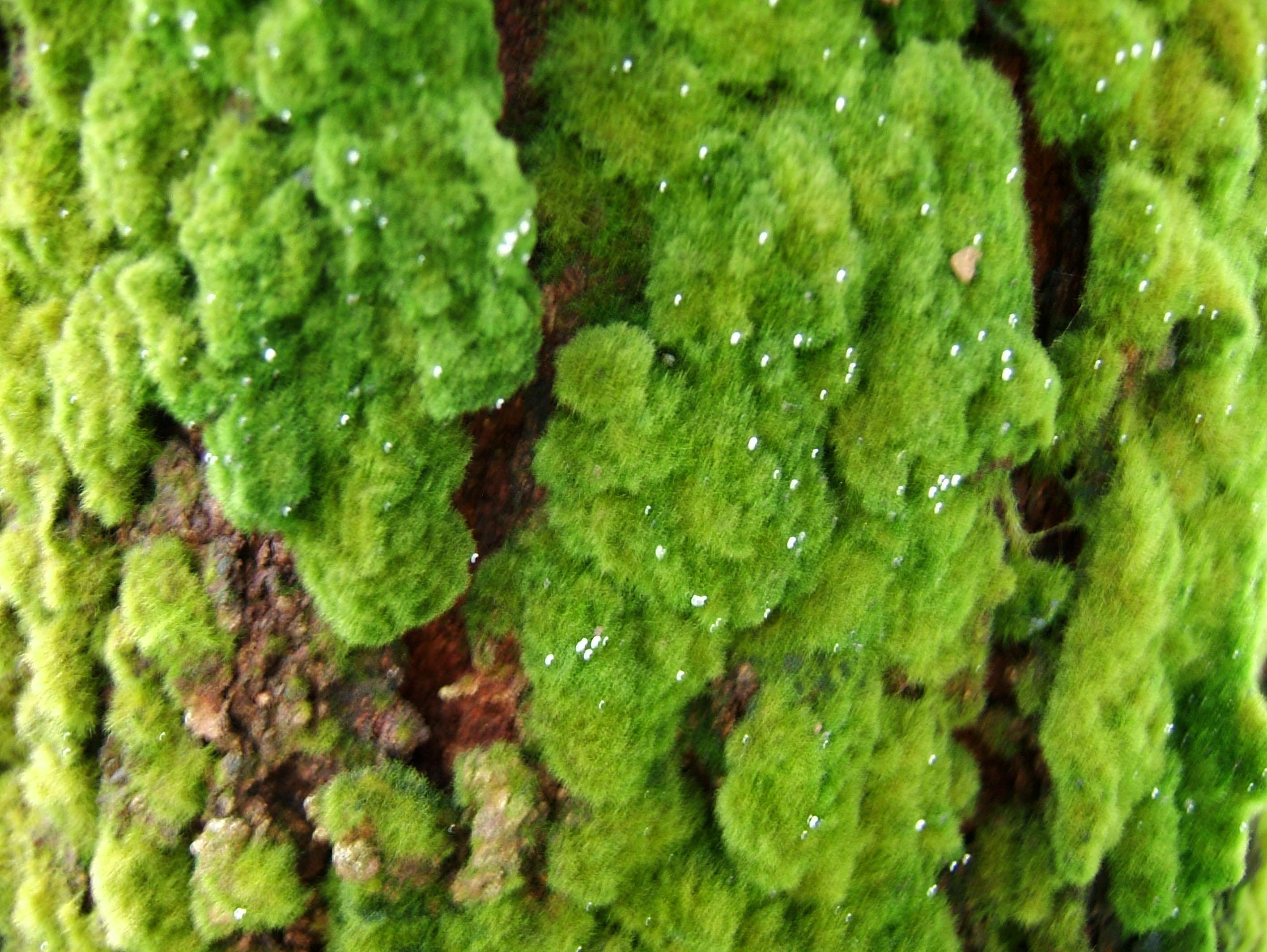 Textures Moss Singapore Botanical Gardens 02