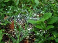 Asisbiz Textures Grass Molds 05