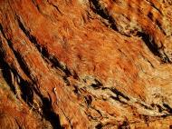 Asisbiz Textures Trees bark 01